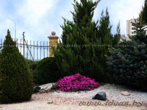 альпийская горка-растения-своими руками