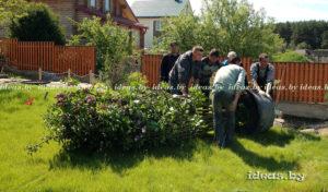 посадка деревьев в Минске
