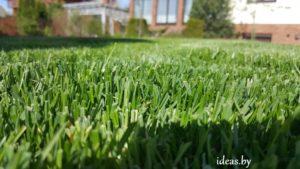 газон в Минске