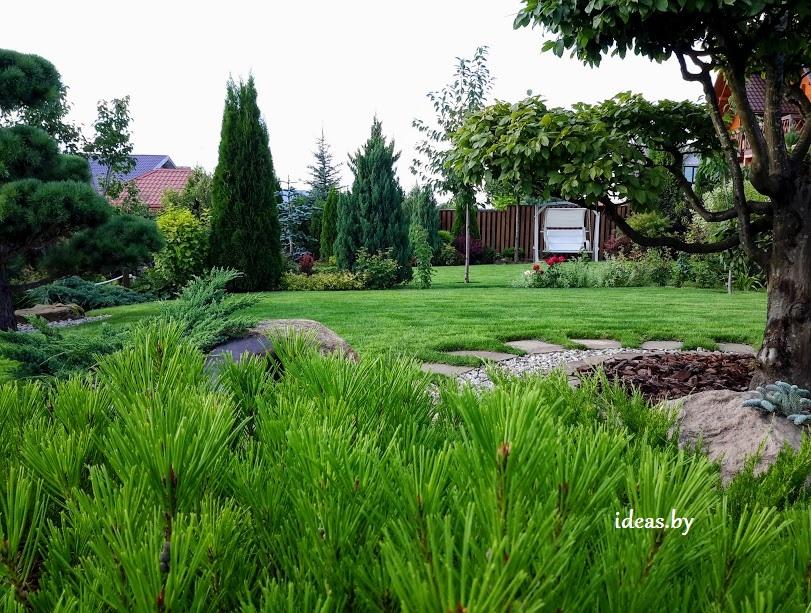 заказать посевной-рулонный газон в Минске