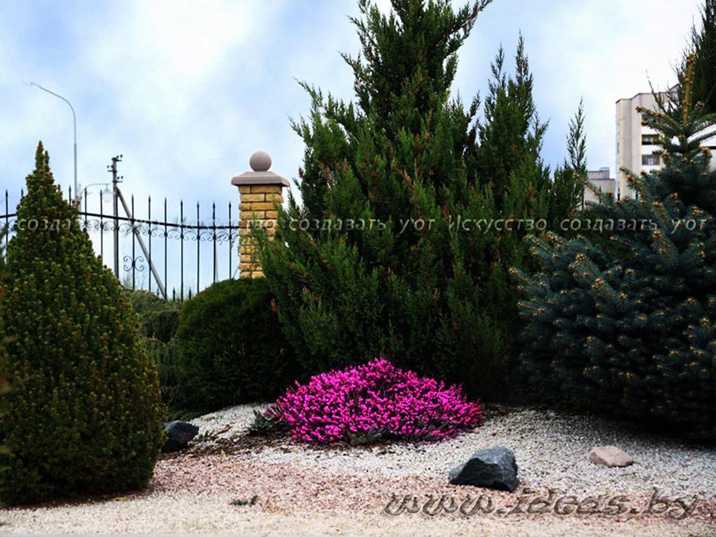 вереск-альпийская горка-растения